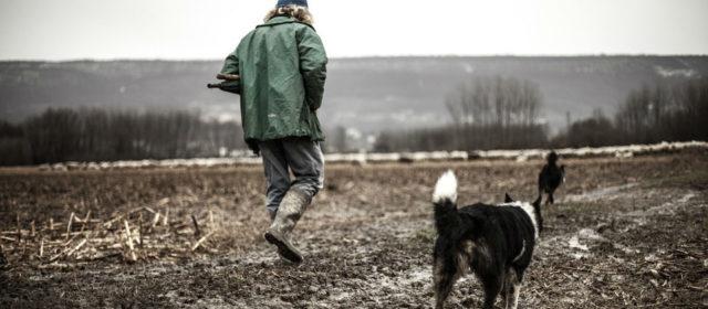 Comment exercer le métier de garde chien ?